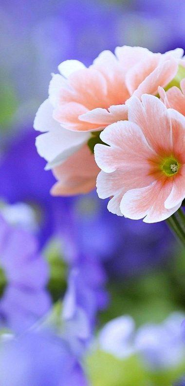 Beautiful Flowers Wallpaper 1080x2248 380x791