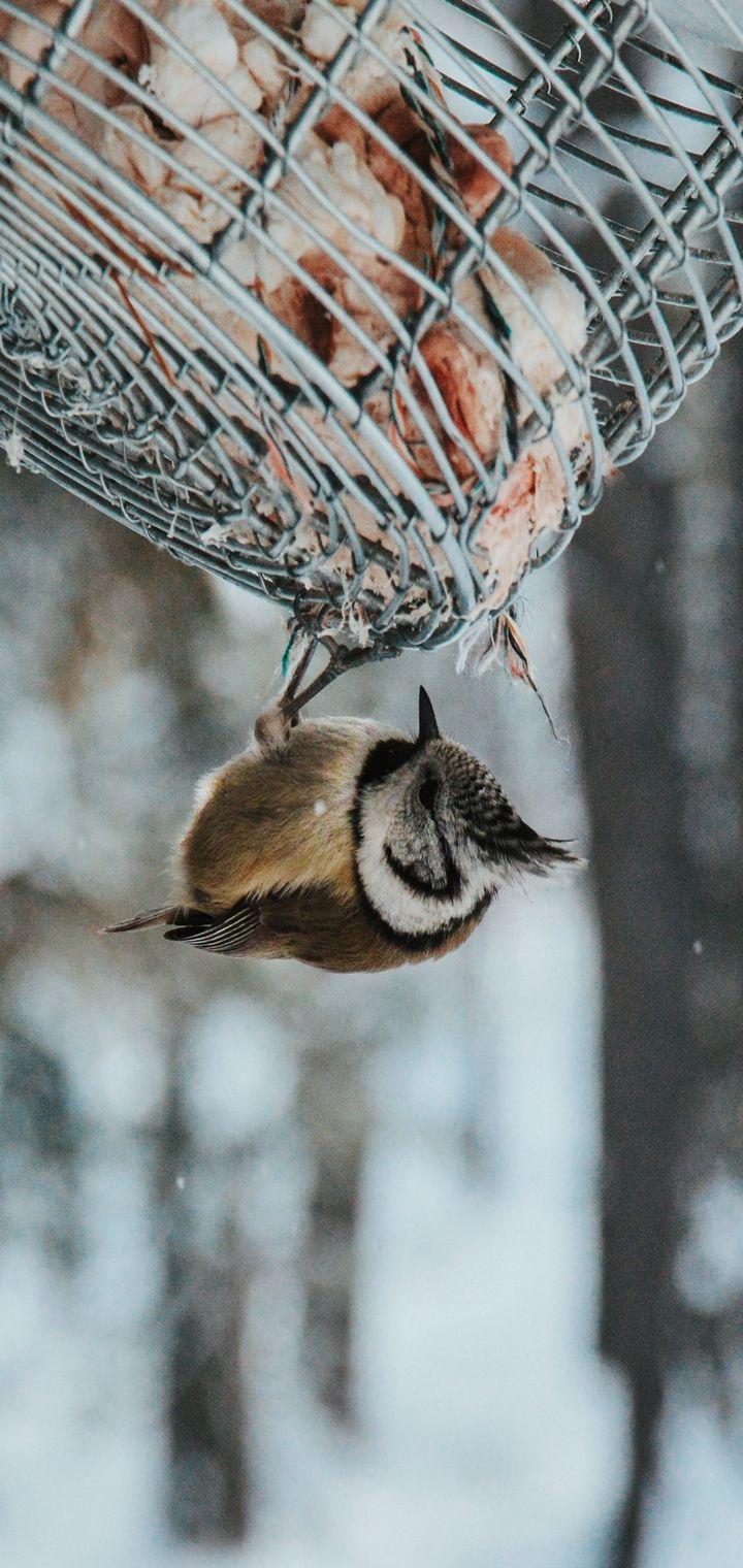 Bird Stack Snow Wallpaper 720x1520