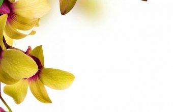 Butterflies Orchid Painting Art Animals Wallpaper 720x1520 340x220