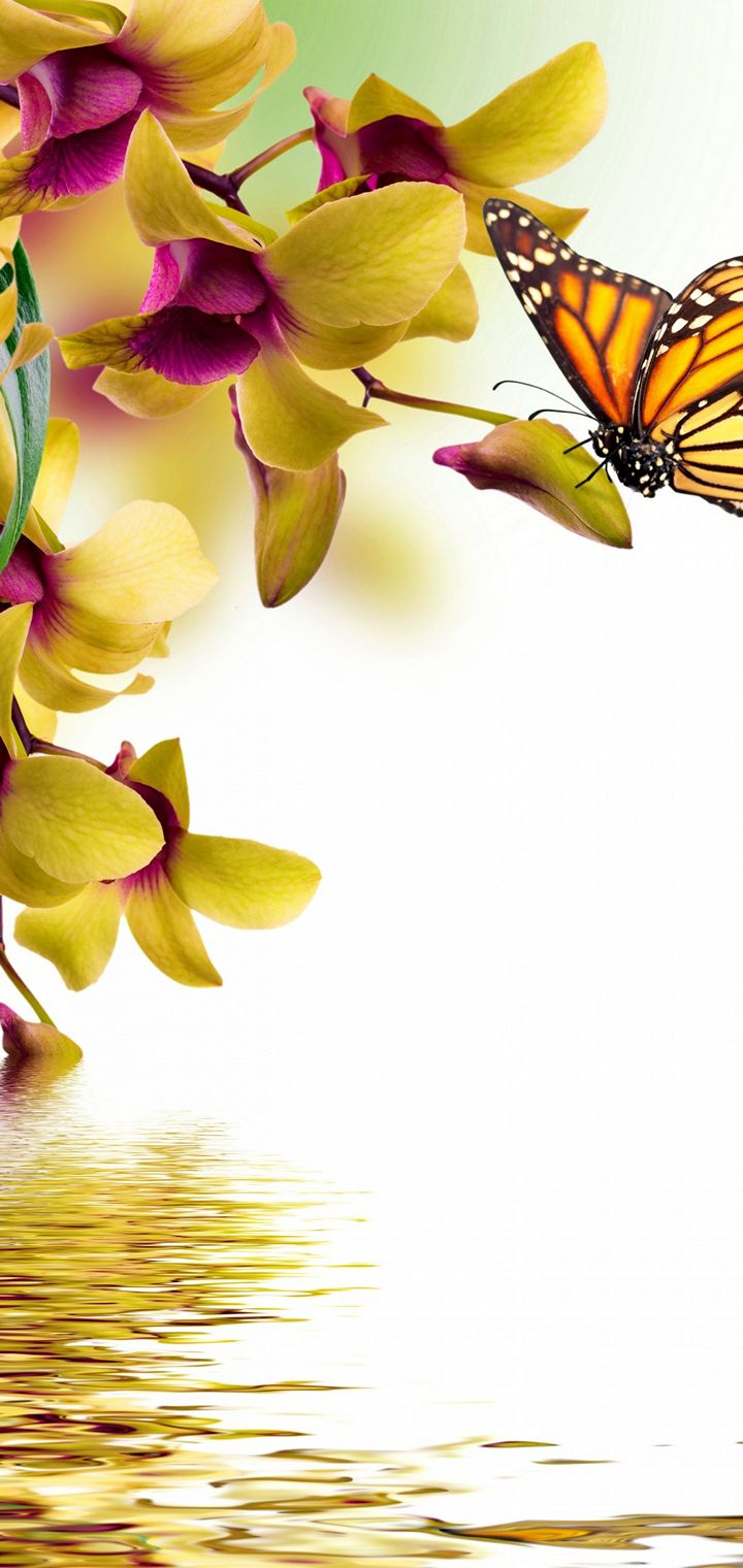 Butterflies Orchid Painting Art Animals Wallpaper 720x1520
