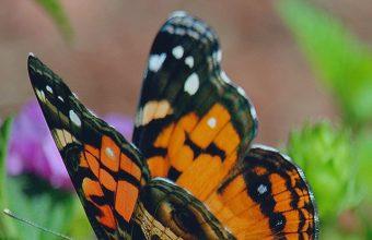 Butterfly Flower Patterns Wallpaper 720x1520 340x220