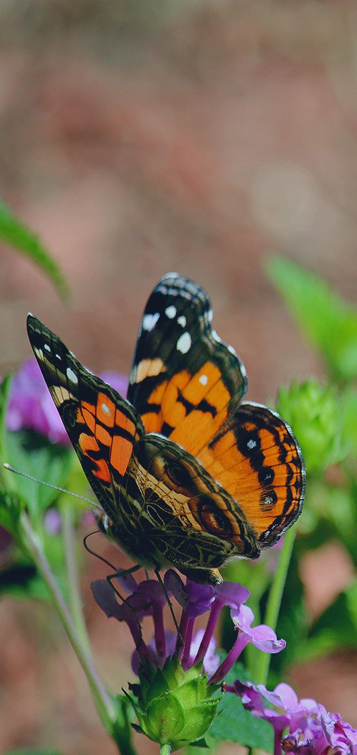 Butterfly Flower Patterns Wallpaper 720x1520