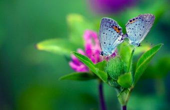 Butterfly Flower Wallpaper 960x600 340x220