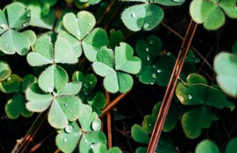 Clover Leaves Branches Wallpaper 720x1520 340x220