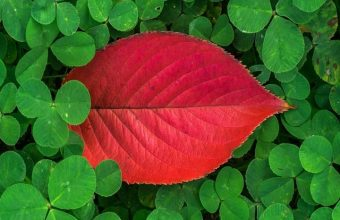 Clover Leaves Plant Green Wallpaper 720x1520 340x220