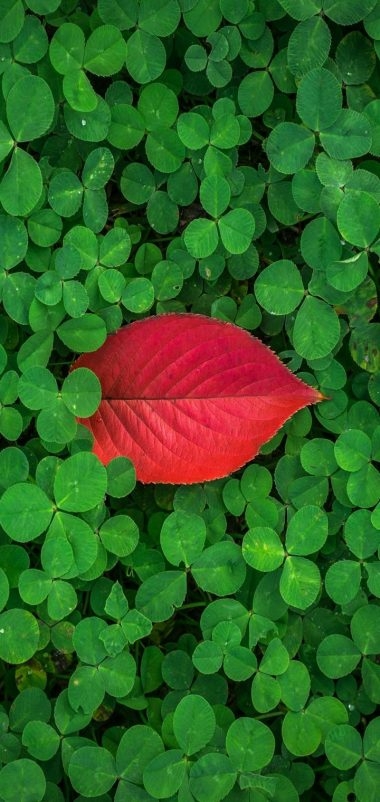 Clover Leaves Plant Green Wallpaper 720x1520 380x802