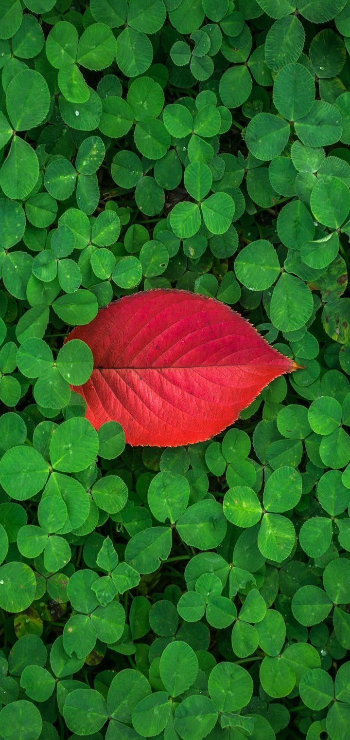 Clover Leaves Plant Green Wallpaper 720x1520