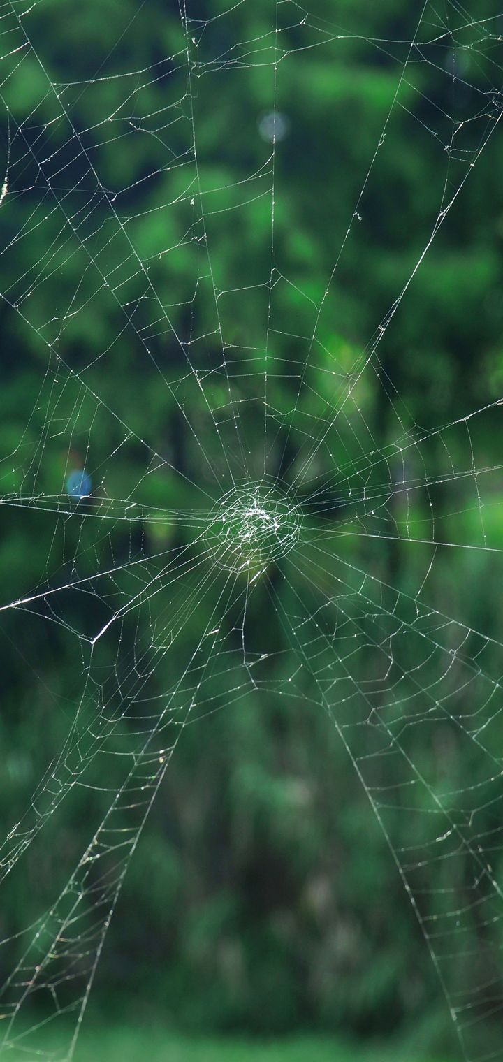 Cobweb Grid Netting Wallpaper 720x1520