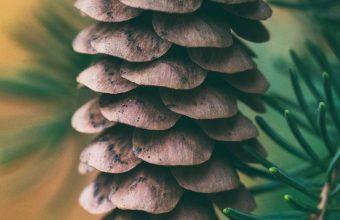 Cone Spruce Blur Wallpaper 720x1520 340x220