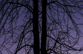 Couple Silhouettes Tree Wallpaper 720x1520 340x220