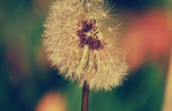 Dandelion Flower Blur Wallpaper 720x1520 340x220