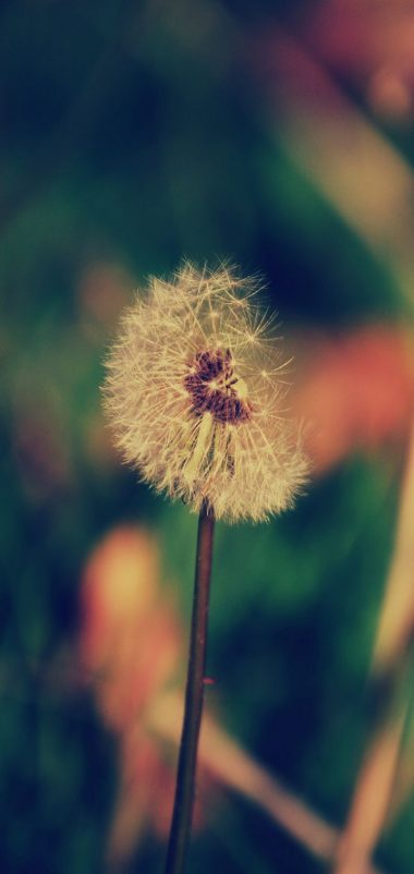 Dandelion Flower Blur Wallpaper 720x1520 380x802