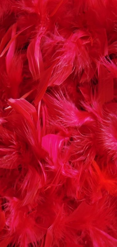 Feathers Down Red Wallpaper 720x1520 380x802