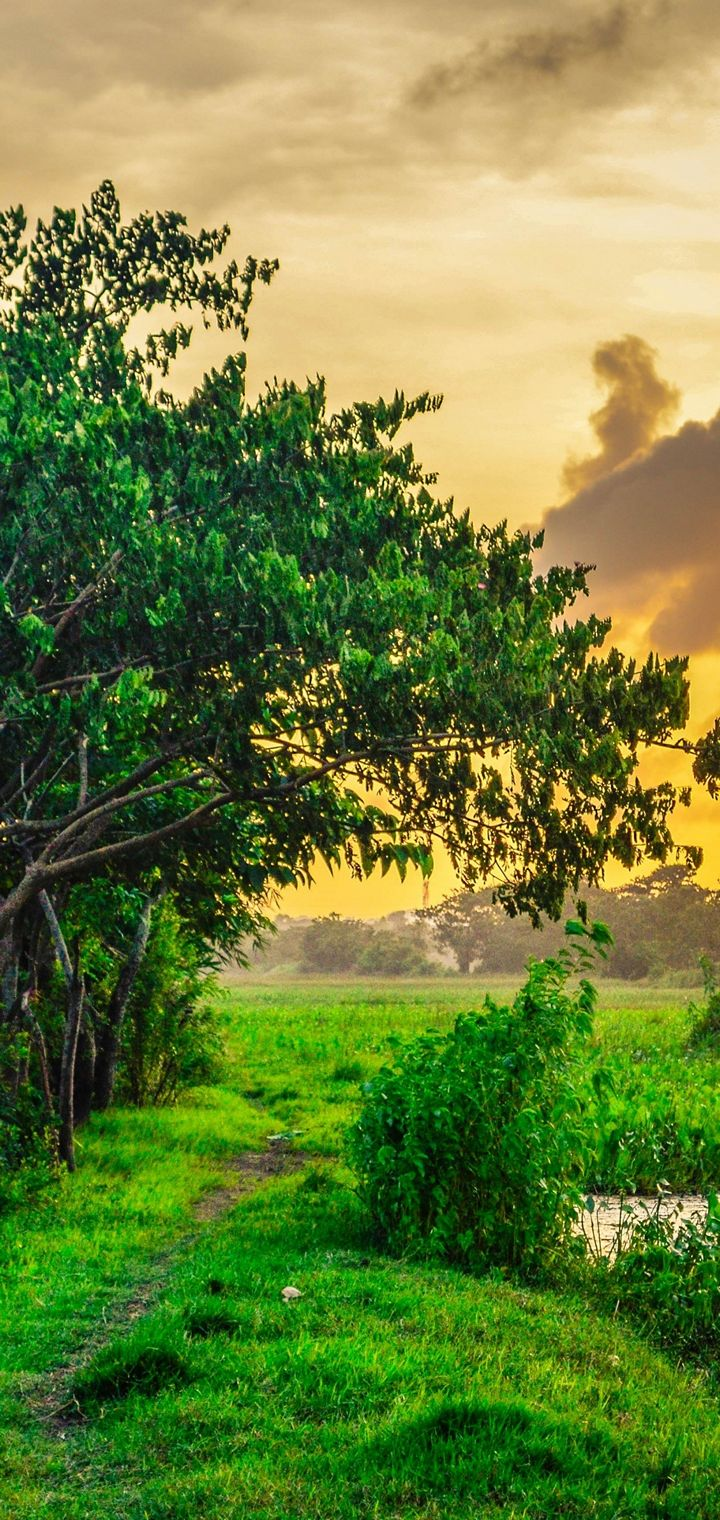 Field Sunset Tree Landscape Wallpaper 720x1520