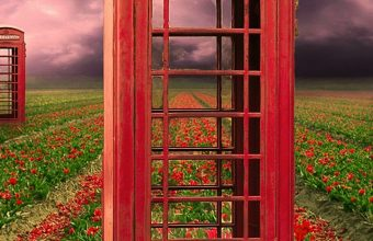 Field Telephone Booths Flowers Wallpaper 720x1520 340x220