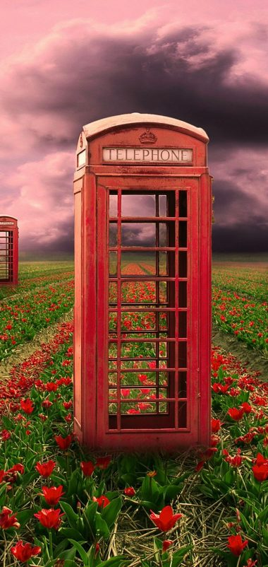 Field Telephone Booths Flowers Wallpaper 720x1520 380x802