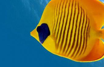Fish Underwater World Animals Wallpaper 720x1520 340x220