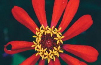 Flower Bud Petals Wallpaper 720x1520 340x220