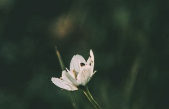 Flower Grass Blur Wallpaper 720x1520 340x220