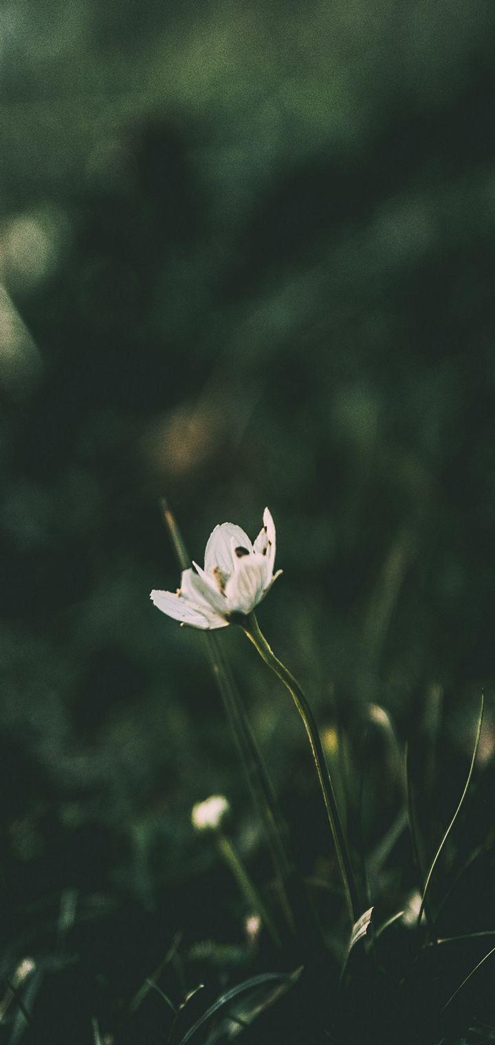 Flower Grass Blur Wallpaper 720x1520