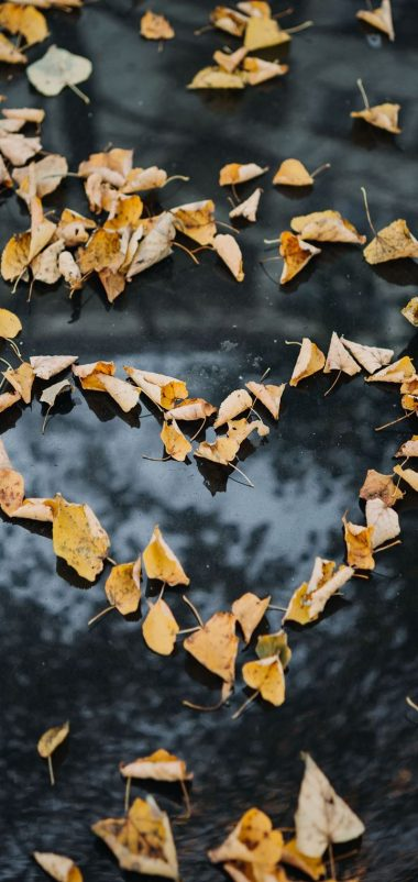 Foliage Autumn Heart Dry Fallen Wallpaper 720x1520 380x802