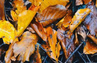 Foliage Fallen Autumn Wet Wallpaper 720x1520 340x220