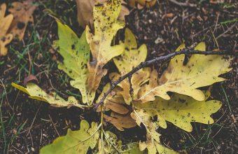 Foliage Oak Autumn Grass Wallpaper 720x1520 340x220