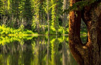 Forest Grass Lake Landscape Wallpaper 720x1520 340x220