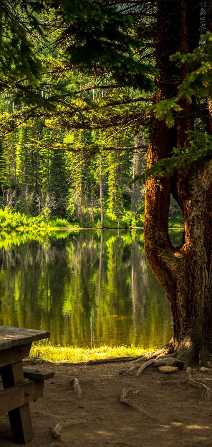 Forest Grass Lake Landscape Wallpaper 720x1520