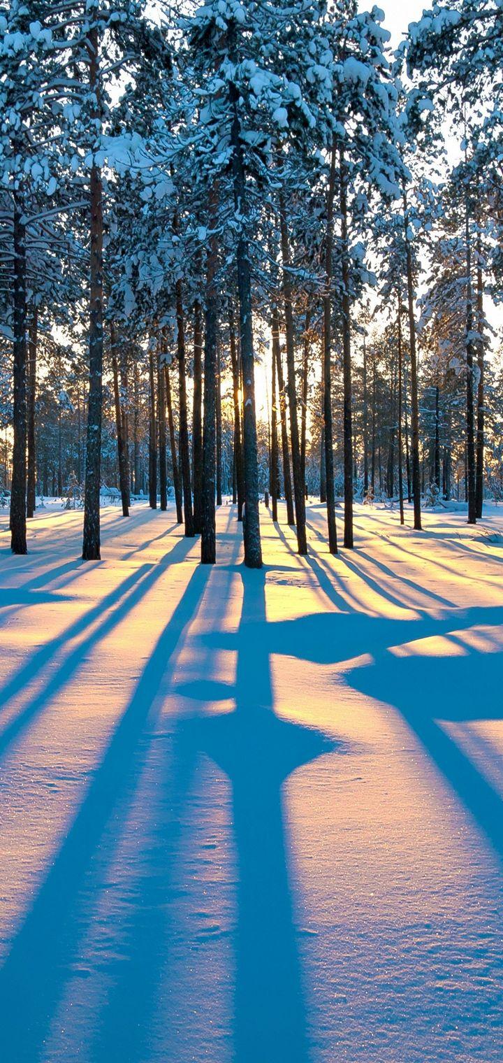 Forest Sunrise Winter Trees Wallpaper 720x1520