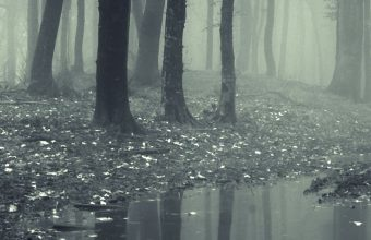 Forests Fog Puddle Nature Wallpaper 720x1520 340x220