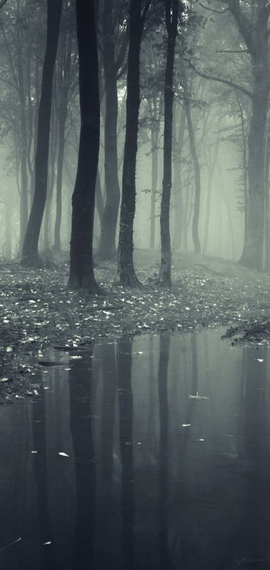 Forests Fog Puddle Nature Wallpaper 720x1520 380x802