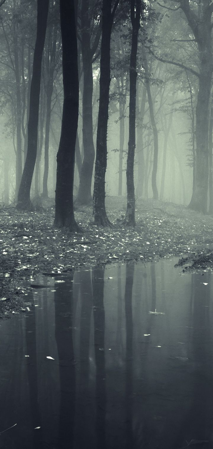 Forests Fog Puddle Nature Wallpaper 720x1520