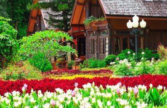 Gardens Tulips Houses Shrubs Grass Wallpaper 720x1520 340x220