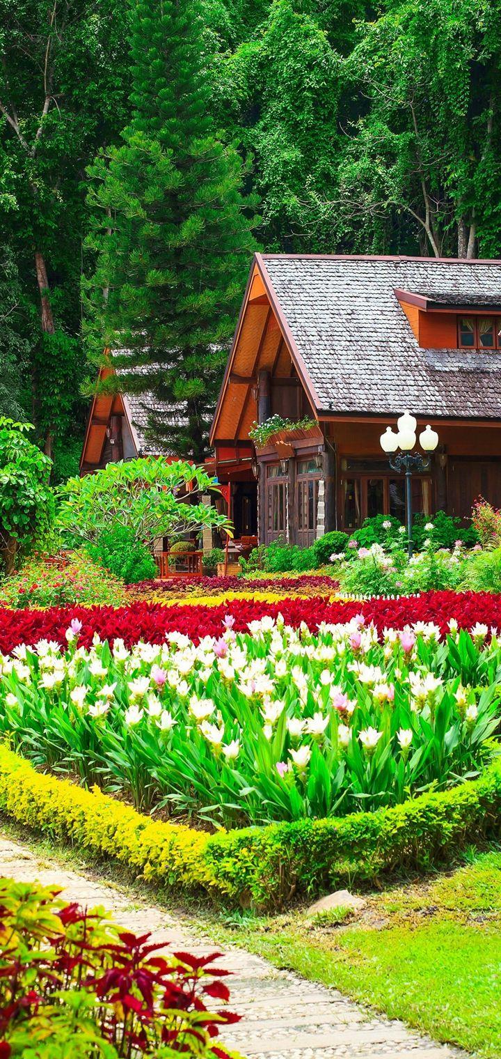 Gardens Tulips Houses Shrubs Grass Wallpaper 720x1520