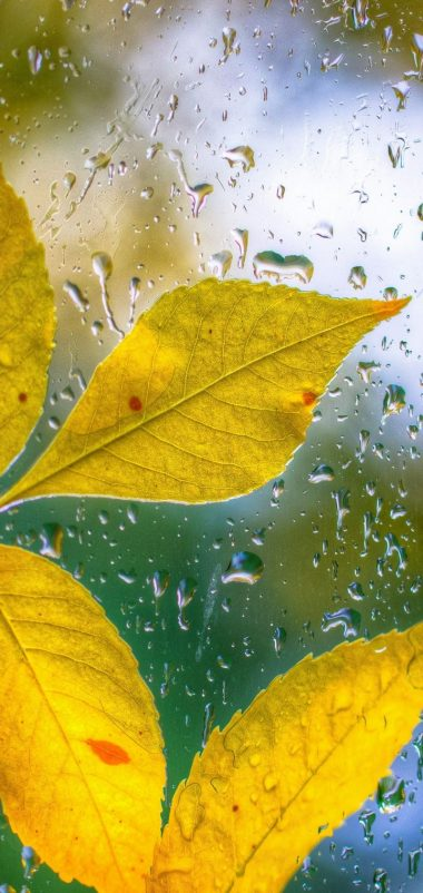 Glass Drops Leaves Autumn Bokeh Wallpaper 720x1520 380x802