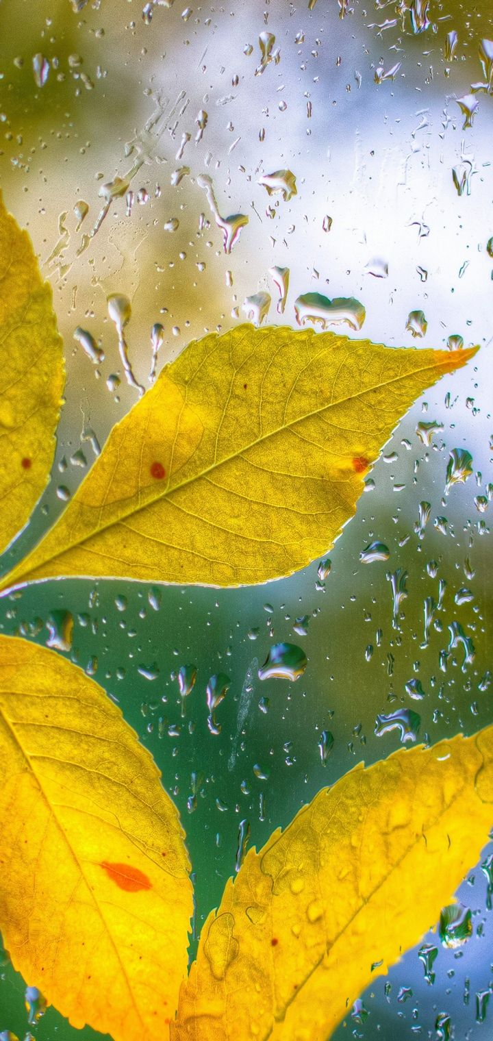 Glass Drops Leaves Autumn Bokeh Wallpaper
