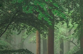 Green Trees Wallpaper 720x1520 340x220