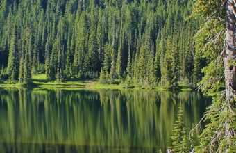 Lake Mountains Trees Landscape Wallpaper 720x1520 340x220