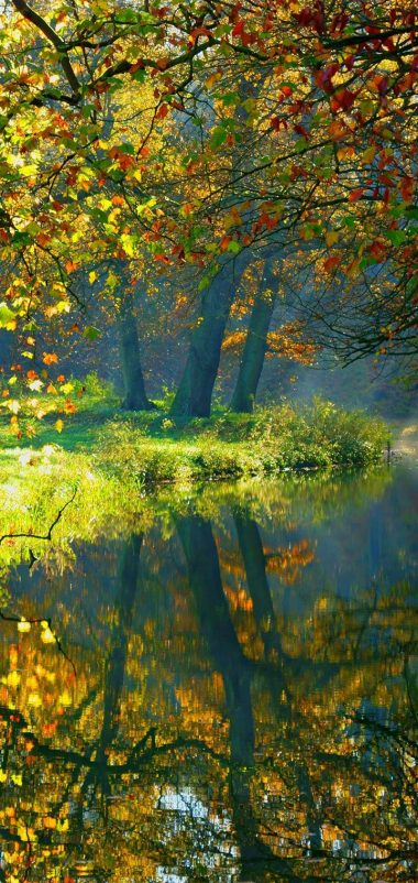 Landscape Nature Autumn Forest Wallpaper 720x1520 380x802