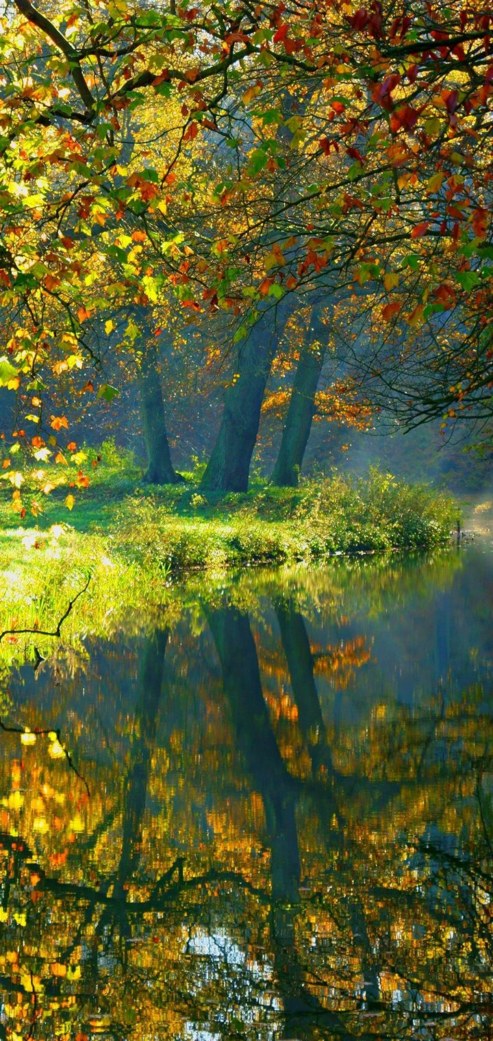 Landscape Nature Autumn Forest Wallpaper 720x1520