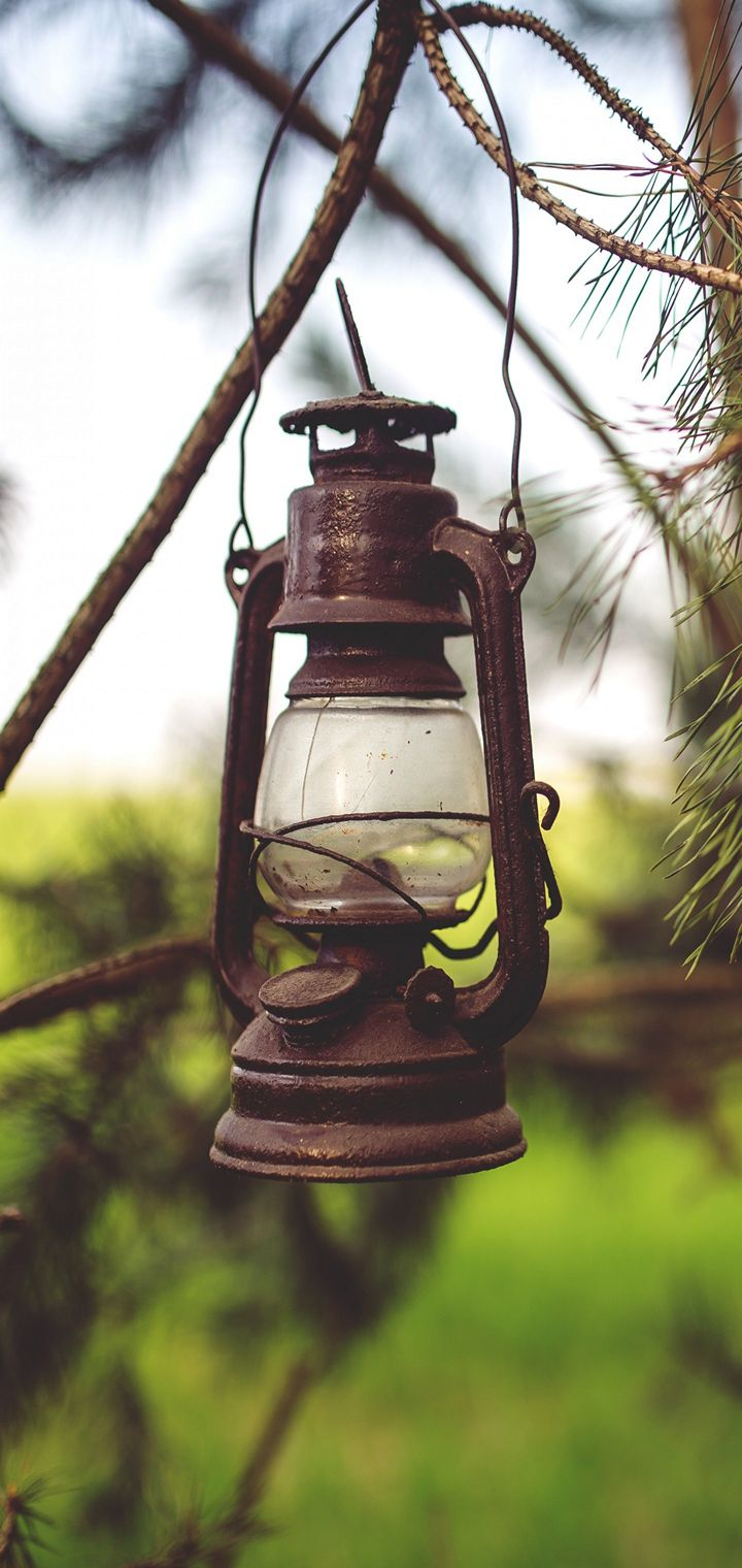 Lantern Lamp Branches Wallpaper 720x1520