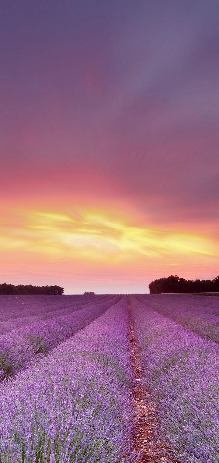 Lavandula Fields Sky Clouds Flowers Wallpaper 720x1520
