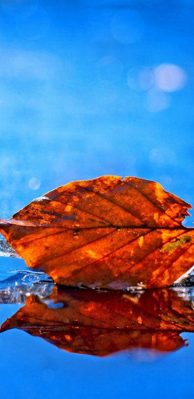 Leaf Fall Pic Wallpaper 720x1480 380x781