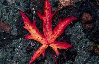 Leaf Fallen Autumn Dry Wallpaper 720x1520 340x220