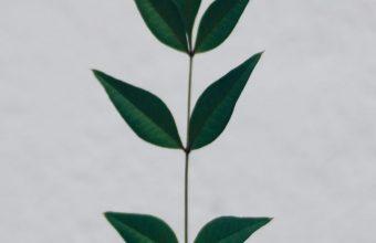 Leaf Hand Branch Wallpaper 720x1520 340x220