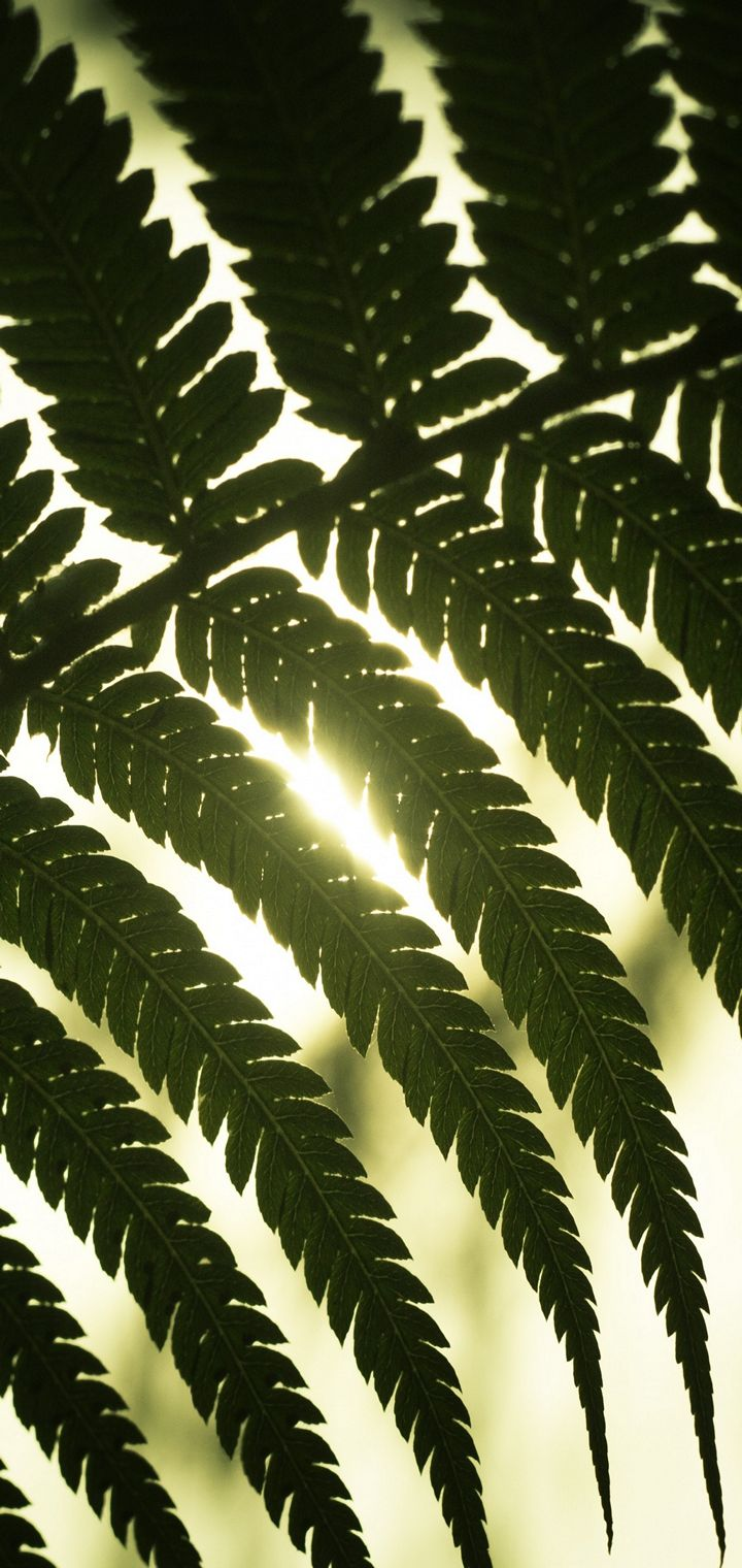 Leaf Light Shadow Wallpaper 720x1520