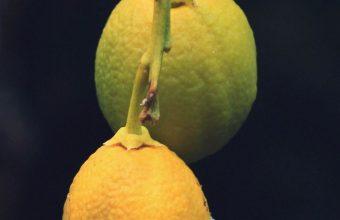 Lemons Citrus Branch Wallpaper 720x1520 340x220