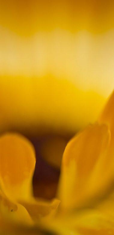 Macro Petals Flower Wallpaper 720x1480 380x781