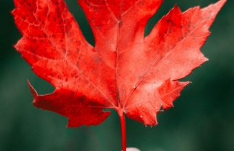 Maple Leaf Autumn Hand Wallpaper 720x1520 340x220